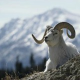 SHEEP MOUNTAIN, KLUANE NATIONAL PARK