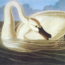 Audubon Collection
