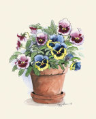 Peggy Abrams - Potted Mixed Pansies