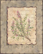Constance Lael - Vintage Herbs-Thyme