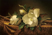 Martin Johnson Heade - Magnolia On Gold Velvet Cloth