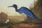 John James Audubon - Blue Crane Or Heron