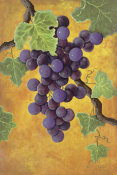 Jennifer Lorton - Red Wine Grapes