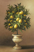Welby - Potted Lemon Tree