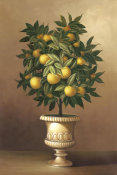 Welby - Potted Orange Tree