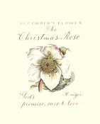 Constance Lael - December's Flower, The Christmas Rose