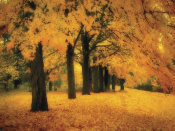 M. Ellen Cocose - Gold of Autumn East