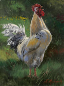 N. Mirkovich - White And Yellow Rooster
