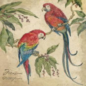 Betty Whiteaker - Macaw