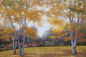 Diane Romanello - Autumn Birch