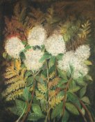 Maret Hensick - Hydrangeas and Ferns