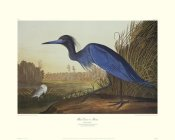 John James Audubon - Blue Crane Or Heron (decorative border)