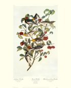 John James Audubon - Audubon's Warbler (decorative border)