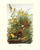 John James Audubon - Meadow Lark (decorative border)