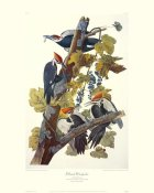 John James Audubon - Pileated Woodpecker (decorative border)