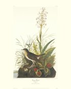 John James Audubon - Tawny Thrush (decorative border)