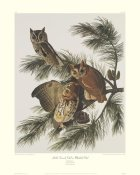 John James Audubon - Little Screech Owl or Mottled Owl (decorative border)