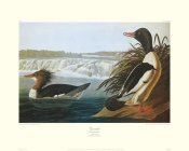 John James Audubon - Goosander (decorative border)