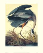 John James Audubon - Great Blue Heron (decorative border)