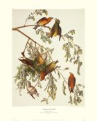 John James Audubon - American Crossbill (decorative border)