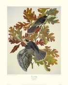 John James Audubon - Canada Jay (decorative border)