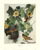 John James Audubon - Baltimore Oriole (decorative border)