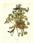John James Audubon - Blue Grosbeak (decorative border)