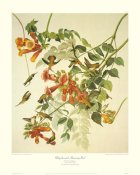 John James Audubon - Ruby-Throated Hummingbird (decorative border)