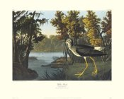 John James Audubon - Yellow Shank (decorative border)