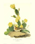 John James Audubon - Grass Finch Or Bay-Winged Bunting (decorative border)