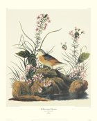 John James Audubon - Yellow-Winged Sparrow (decorative border)