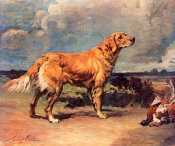 Maud Earl - Golden Retriever