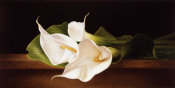 Patrick Farrell - Calla Lillies on Ledge