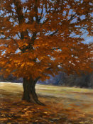 Bruce Braithwaite - Fall Maple
