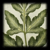 June Hunter - Variegated Fern I
