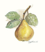 Peggy Abrams - Pear