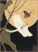Anita Munman - Moonflower & Moth
