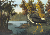 John James Audubon - Yellow Shank