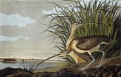 John James Audubon - Male and Female Long Billed Curlew