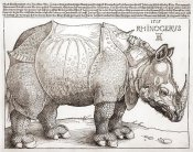 Albrecht Durer - The Rhinoceros