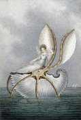 Amelia Jane Murray - A Fairy Resting On a Shell