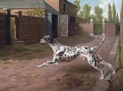 Philip Reinagle - A Dalmation Running In a Stable Yard