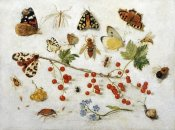 Jan Van Kessel - Butterflies, Moths and Other Insects