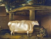 Thomas Weaver - The White Heifer That Travelled