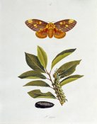 John Abbot - The Natural History of The Rarer Lepidopterous Insects of Georgia 1794