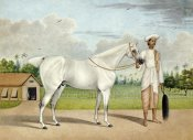 Shaikh Muhammad Amir - A Small White Stallion