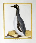 Georges-Louis Leclerc Buffon - A Penguin, Falkland Islands