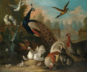 Marmaduke Cradock - A Peacock and Other Birds