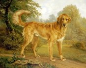 Niels Aagaard Lytzen - A Golden Retriever On a Path