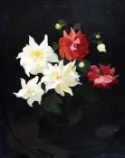 James Stuart Park - Red and White Dahlias